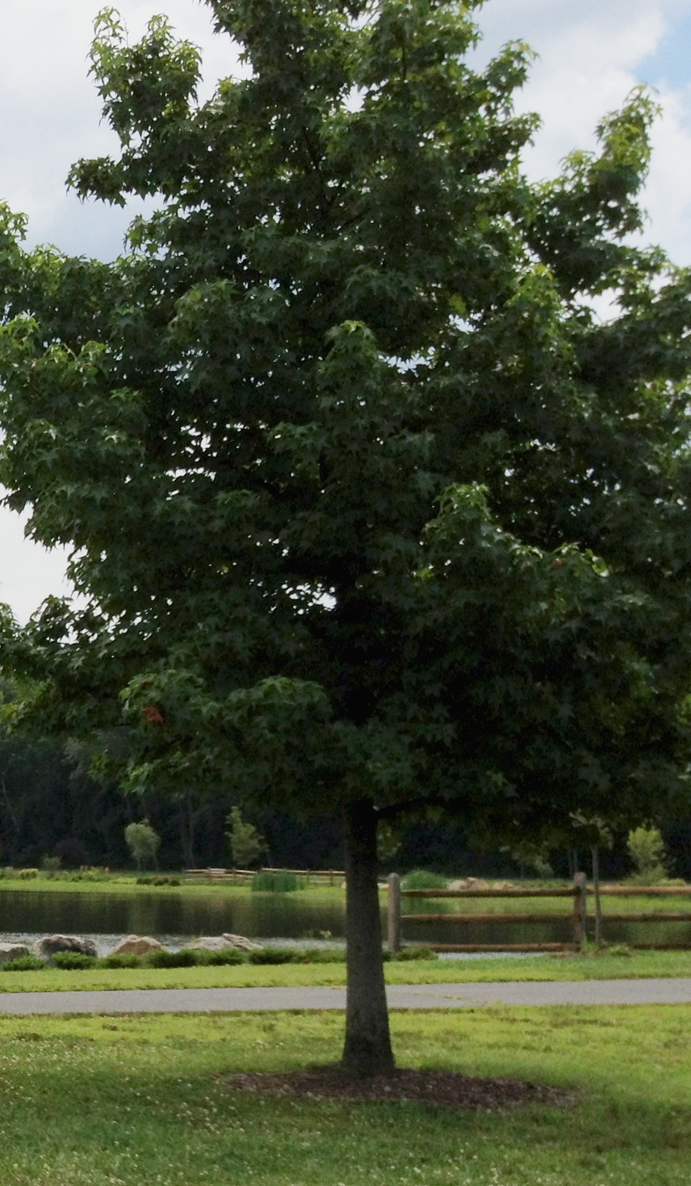 Tree Planting Tips - Tree Resolutions, Trees & Urban Forestry